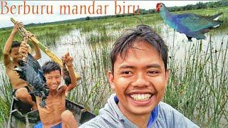 Hunting Burung Mandar Biru