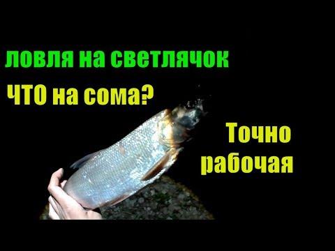Рыбалка июнь р.Ока.Ловля,вечер,ночь СОМ,СУДАК,ГУСТЕРА.