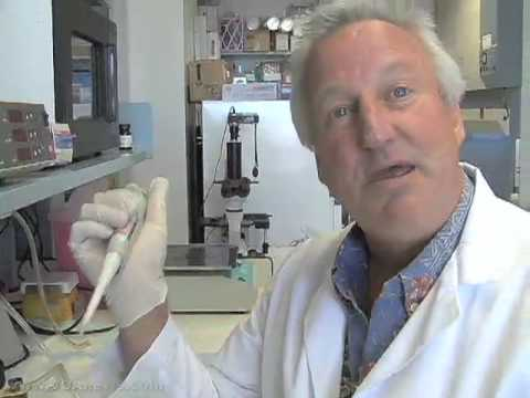 Stem Cell Research Could Cure Type1 Diabetes