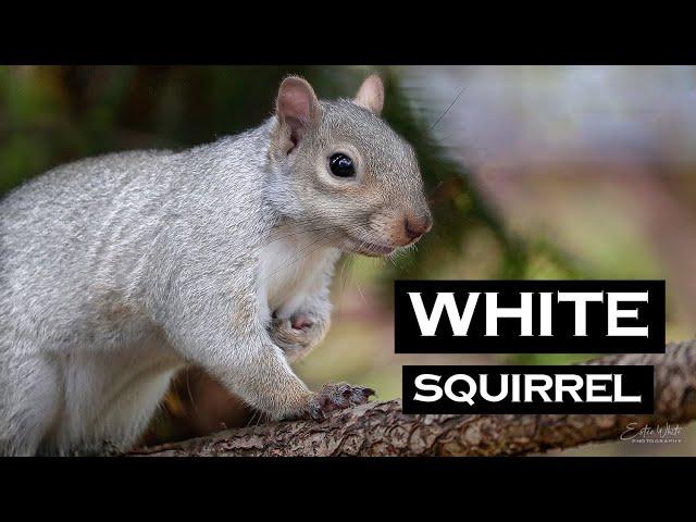White Squirrel | Estee White Photography