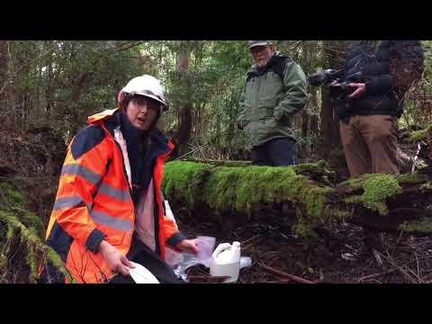 Day 19 Tree House Challenge: Windermere Primary Go Bush