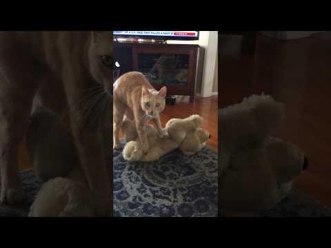 Simon the cat - FREE Massage & Acupressure