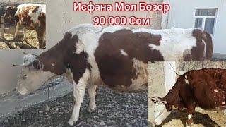 Исфана Мол Бозор 90 000 Сом Мурожат Учун Тел 0776650606 Тел 0773104036