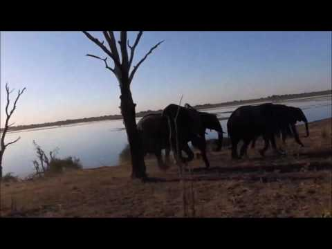 Chobe River Front Safari Drive