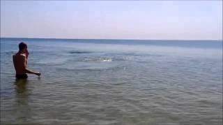 Дельфин на пляже в ст  Благовещенская, Анапа 13 06 2015г(Дельфин на пляже в ст Благовещенская, Анапа 13 06 2015. Видео из Одноклассников., 2015-06-19T18:16:31.000Z)