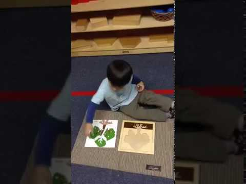 Botany at Apple Montessori Schools