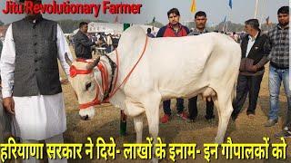 👍(Desi cows)Champion Haryana Breed गाय 18.278 किलो प्रतिदिन दूध (A2) जिसपे भारत को है नाज़ 👍