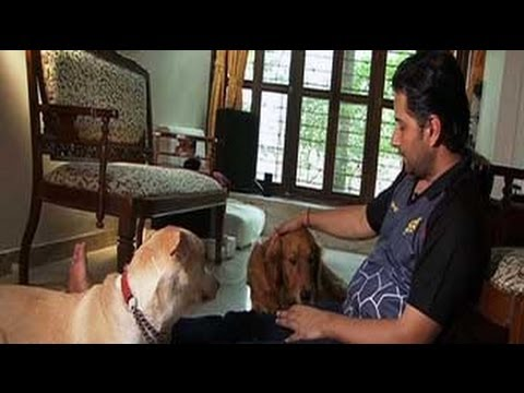 Varun-Raageshwari's pampered pooches