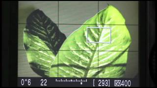 How to Use Live View to Determine Depth of Field with Digital Cameras