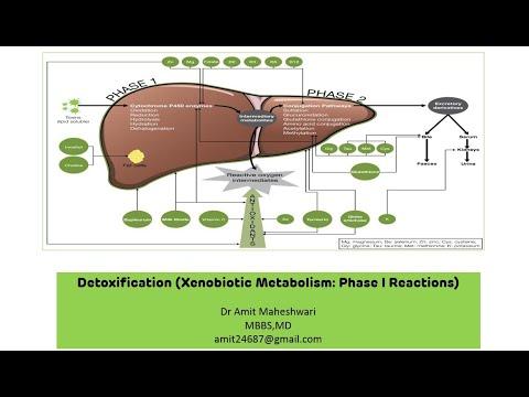 Xenobiotic Metabolism || Detoxification - Phase I Reactions || Biochemistry || Part 01