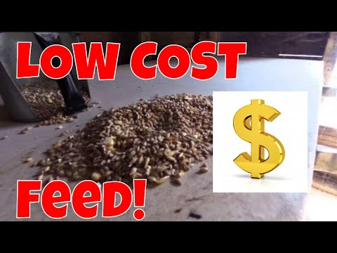 How to find Low cost chicken feed  - A New option - Wheat,Oats,Cracked corn