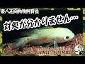 2013 09 08 botナニワ金融道(お色気白石ひとみ) - YouTube