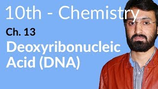 10th Class Chemistry, ch 13, Deoxyribonucleic Acid (DNA) - Matirc Class Chemistry