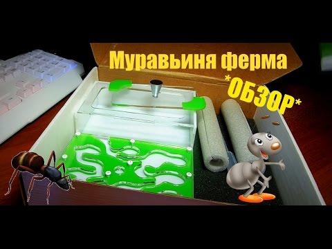 [ОБЗОР]-МУРАВЬИНАЯ ФЕРМА!