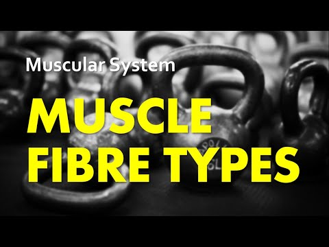 Anatomy & Physiology | Muscular System 05 - Muscle Fibre Types