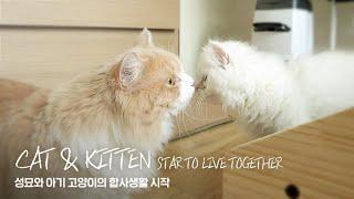 SUB) 두 고양이의 동거가 시작됐다