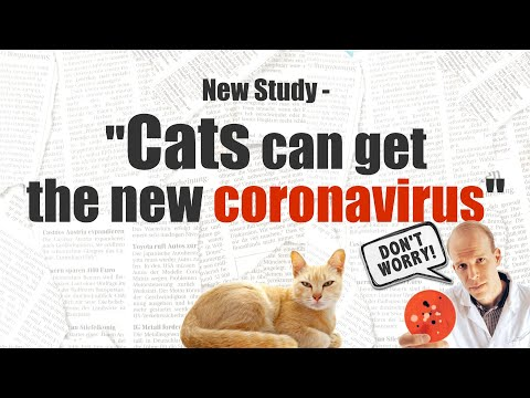 New Study Shows Cats Can Get Coronavirus