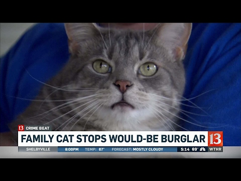Cat stops would-be burglar