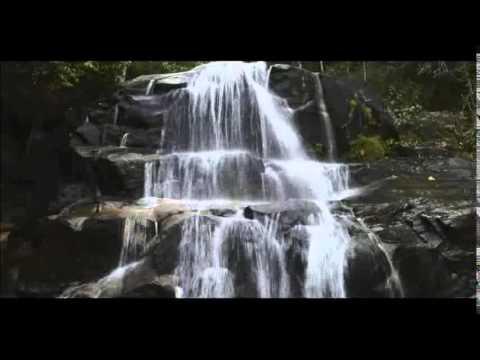 Spirit of the Rainforest (David Arkenstone) - Sunbeams