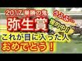 【競馬予想】2017 弥生賞 マイスタイル 単勝の鬼
