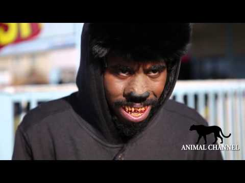 G-Mo Skee - The Honey Badger
