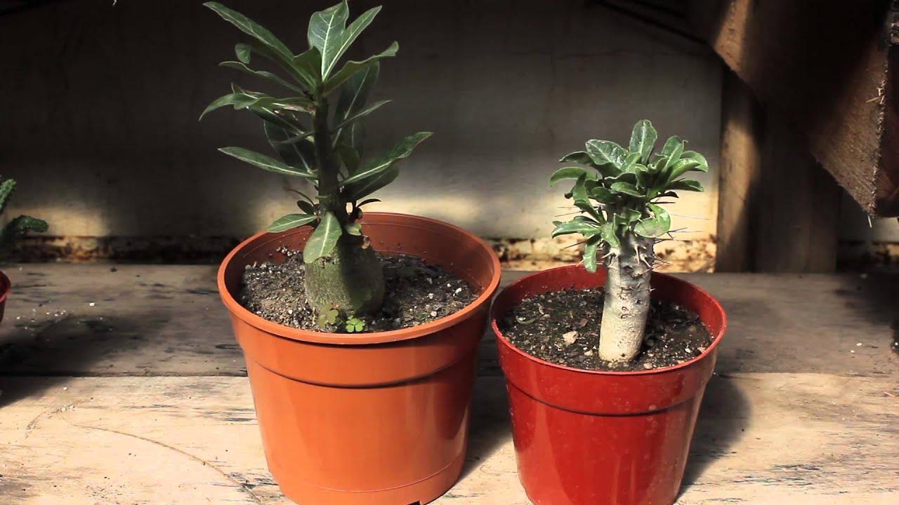 Orqu deas cactus y crasas de colecci n vivero marisel for Vivero de cactus