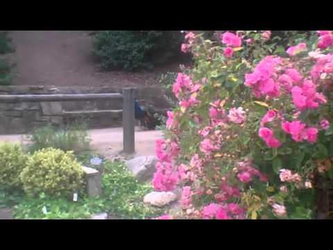 Arboretum & Botanic Garden. Los Angeles 2011