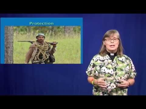 Nurturing Parrots in Honduras Part 2.  Nurture Nature Episode #9