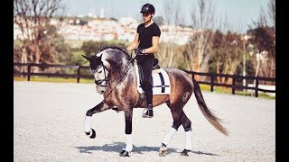 riding-my-new-horse-after-3-months-of-training