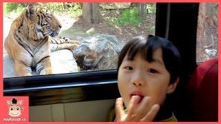 무서운 호랑이 만났어요! 아기 팬더 곰 새 동물의왕국 놀이동산 놀이 ♡ 동물원 동물농장 에버랜드 사파리 어린이 인기동요 Kids Zoo | 말이야와아이들 MariAndKids