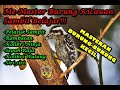 Master Burung Terbaik Kicau  Mp3 - Mp4 Download