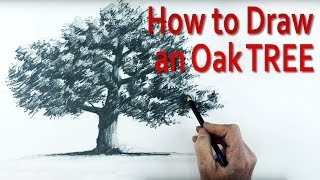 How to Draw an Oak Tree