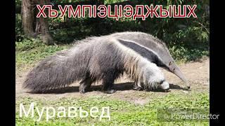 Названия животных на кабардинском языке.  Слайд-шоу из фото.