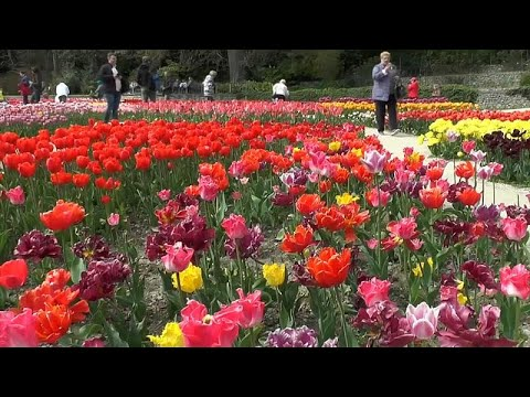 شاهد: 300 نوع من زهور التوليب في حديقة بشبه جزيرة القرم  - نشر قبل 3 ساعة
