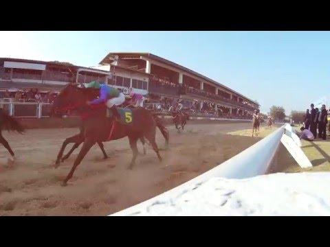 ม้าแข่งสนามโคราชชิงโล่ห์สุรานารีโอเพ่น 27กพ2559