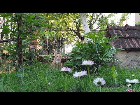 Relaxing Cat Video 56
