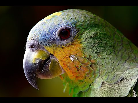 Nature Beauty. Beautiful Birds. Watch and Feel The essence of Nature . Birds are not to be Caged.