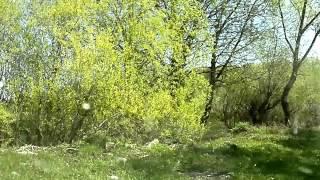 природа и рыбалка в никитском.(, 2012-05-10T12:16:54.000Z)
