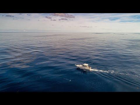 Offshore Fishing On Split Bill | June 29th 2019 | Morehead City NC