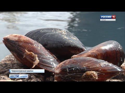 Вопрос: Куда делись мидии в Крыму?