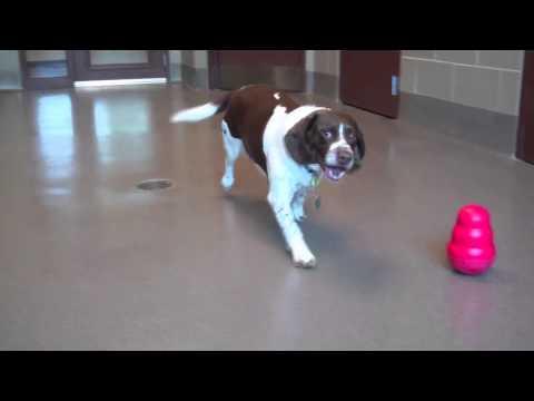 Popular Wisconsin Beagle Adorable Dog - hqdefault  Trends_668247  .jpg