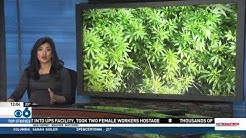 Another Marijuana Segment
