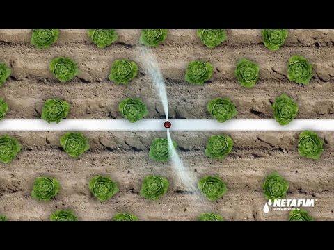 Netafim soluzioni per l 39 irrigazione a goccia youtube for Netafim irrigazione