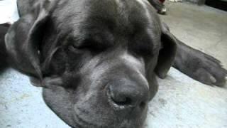 Spca Kills Dogs (vancouver, B.c)