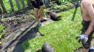 Укладываем рулонный газон(25 мая 2015 - проект