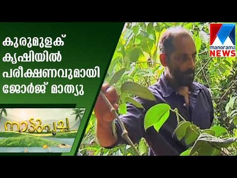 George Mathew with experiments in Pepper crops | Nattupacha