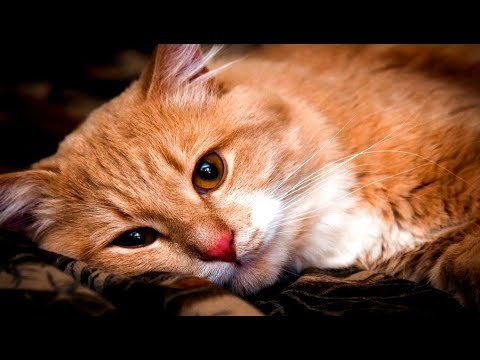 Вопрос: Кошка божья тварь или она от дьявола?
