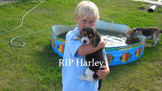 RIP Harley... | Liam Peterson