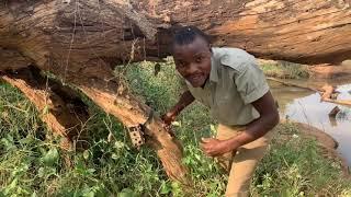 Wildlife Photography: Camera Trapping in Kenya