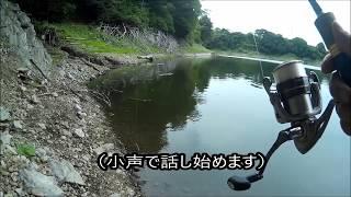 津久井湖行ったら数釣りで遊べた